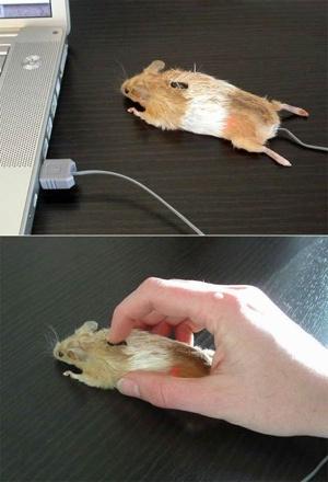 這是一隻真正的滑鼠