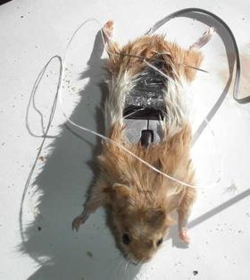 真正的滑鼠